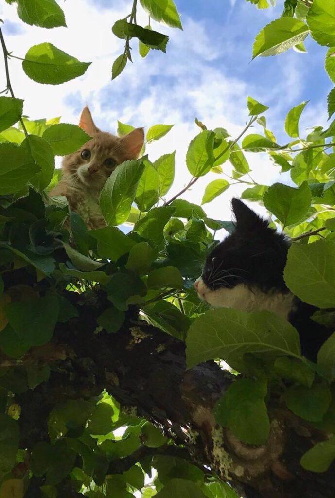 Katter sinnen skriva